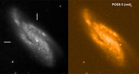 Eine der ersten Aufnahmen der Supernova 2009dd in NGC 4088 gelang Bernd Gährken mit dem 80-cm-Spiegel der VSW München keine 24 Stunden nach ihrer Entdeckung, am 14. April um 22:30 UTC (links). Rechts zum Vergleich die Galaxie in der 2. Palomar Sky Survey. [Gährken]