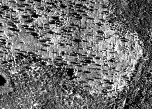 Ein Luftbild aus dem Jahr 1938 zeigt die scharenweise in dieselbe Richtung umgestürzten Bäume in der Tunguska-Region, 30 Jahre nach dem gewaltigen »Airburst«, dessen Druckwelle aus 10km Höhe für die dramatischen Folgen verantwortlich war. [Tunguska-Seiten der Universität Bologna]