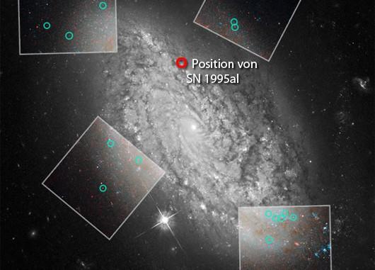 Ein Hubble-Bild von NGC 3021, einer der Schlüsselgalaxien im neuen Projekt zur präziseren Bestimmung der Hubblekonstanten: Hier gab es — 1995 — eine ebenso unproblematische wie gut beobachtete Supernova des Typs Ia, und hier kann Hubble zahlreiche Cepheiden ausmachen (grüne Kreise). Mit Hilfe der letzteren wird die Entfernung der Galaxie bestimmt — und damit die Absoluthelligkeit der Supernova, deren Verwandte man wiederum noch in wesentlich weiter entfernten Galaxien findet, die schon voll im »Strom« der kosmischen Expansion liegen. [NASA, ESA und A. Riess (STScI/JHU)]