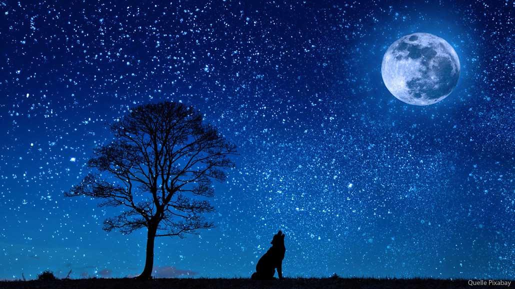 Wolf-Mond-dog-647528_1920