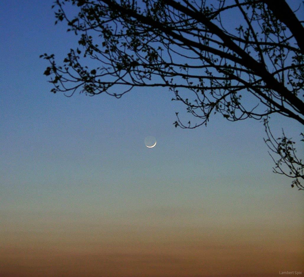 Spix' Blick zum Mond: Sichel am späten Nachmittag