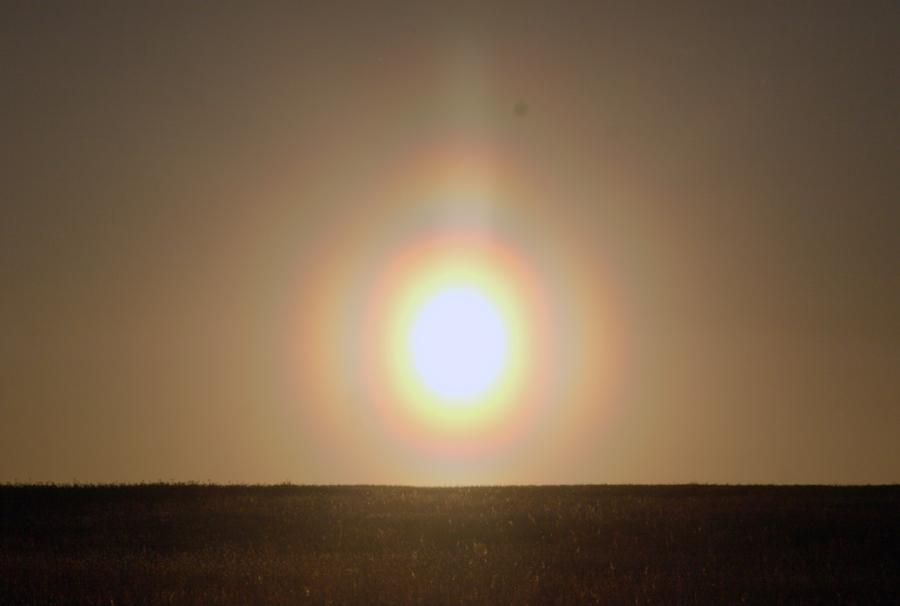 pollenkorona Sonne Fichte 6,5,2018fb