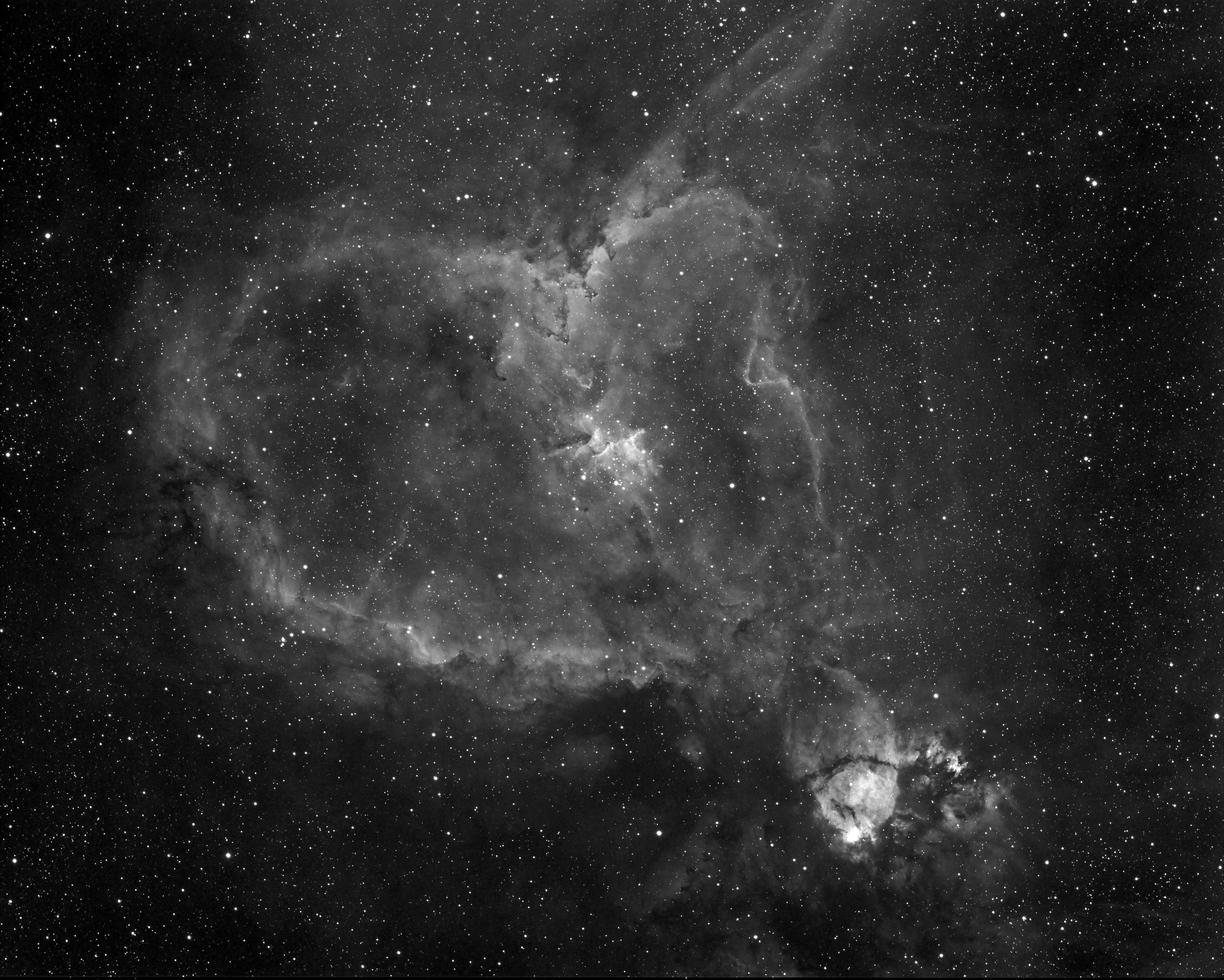 IC1805msuessli